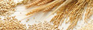Céréales diverses