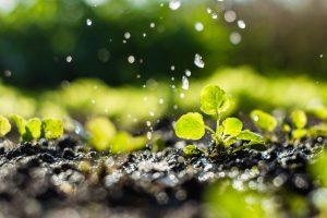 Des plantes qui poussent