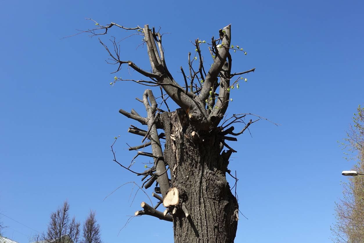 Un tronc d'arbre