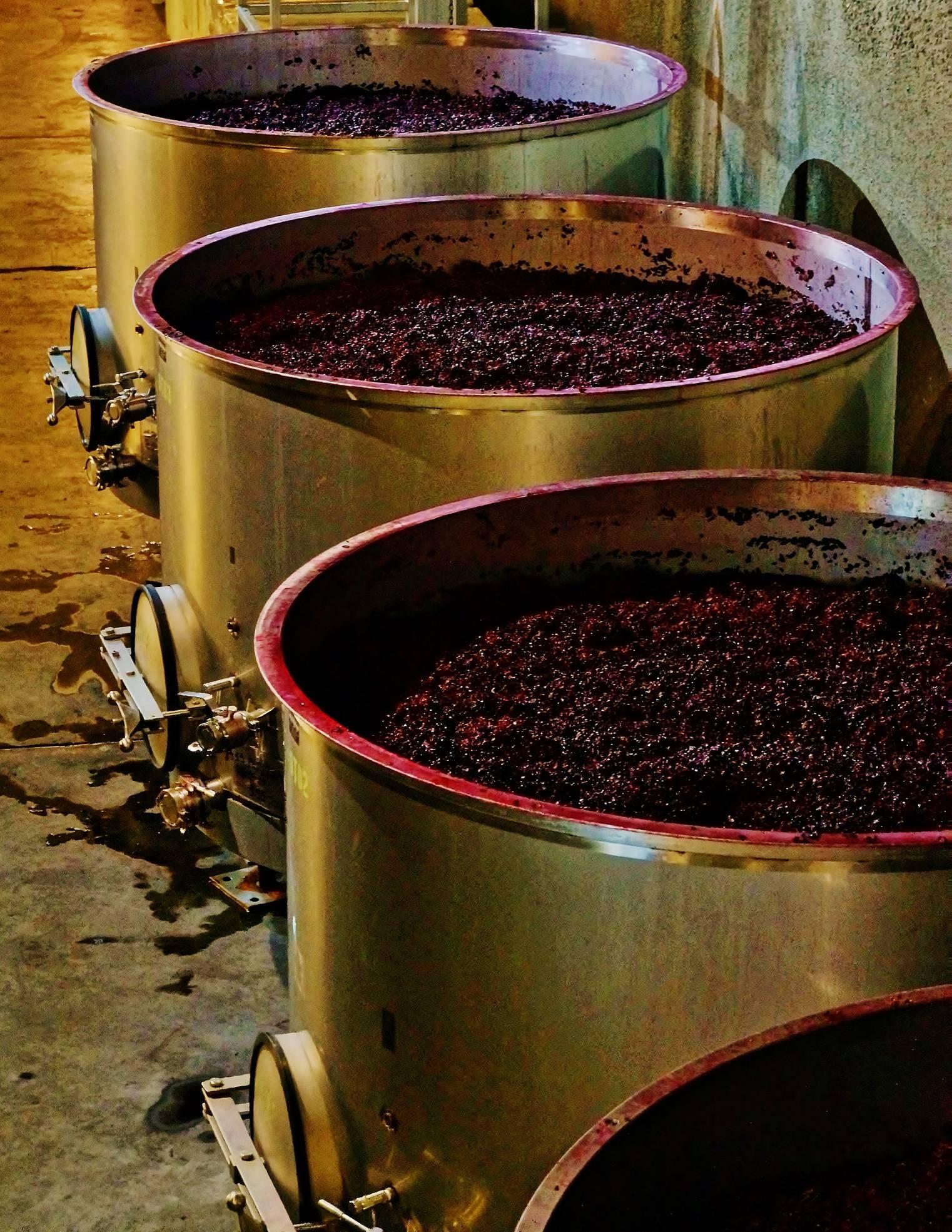 Des tonneaux remplis de raisins écrasés