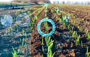 Un champ d'agriculture