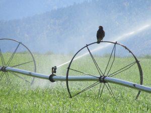 système d'arrosage terrain agricole